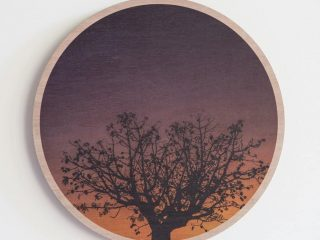 Boab Sunset Wood Print